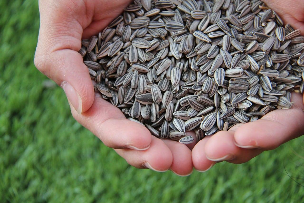 El poder de las semillas de maravilla